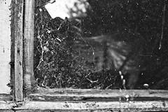 DSC03104 (weekend_vagabond) Tags: wood blackandwhite house bird window glass bench seat shed birdhouse cobweb pane hdr cobwebs