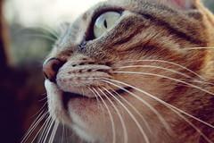 (frogghyyy) Tags: macro eye love animal cat canon eos details dettagli gatto animale animaledomestico 1000d canoneos1000d