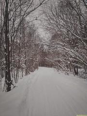 Фрактальная теория снежности конца декабря.