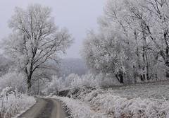 (:Linda:) Tags: germany thuringia village bürden hoarfrost tree curvy path