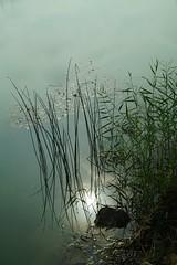 Chwile w krople wody ubrane...tajemnicze i piękne miejsca... (zielonyobiektyw) Tags: ♡ beautifulplace