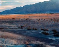 Across the Valley (blue corgi) Tags: deathvalleynationalpark deathvalley mesquiteflats fan mesquitetrees landscape 4x5 lf largeformat toyoviewvs125 nikon300mmf9 copal0 kodakektar100 film