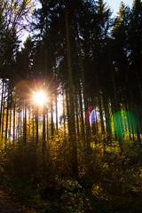 Forest (Nikeee_) Tags: sun forest trees colors sky leaves nature natur laub sonne wald himmel tree baum bäume sunbeams sonnenstrahlen lindenau walk spaziergang herbst autumn farben reflections reflektionen germany deutschland