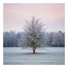 Wintry (Damian_Ward) Tags: damianward photography ©damianward buckinghamshire frost cold winter tree
