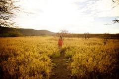 Fields of Gold (cookedphotos) Tags: canon 5dmarkii travel hawaii oahu honolulu diamondhead diamondheadcrater morning dawn sunrise sunlight golden gold woman girl brunette field walking light