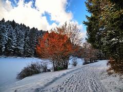 Farbtupfer (almresi1) Tags: schnee snow winter lake see