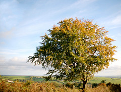 Autumn Tree in Shrule, Co. Wexford, Ireland - Explored 26/12/2016 (murtphillips) Tags: tree raheen wexford farmland blue green