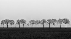 The Symmetrees (Alfred Grupstra) Tags: flat landscape mist trees minimalism