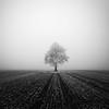 Alone (andrea.dusk) Tags: tree fog black white alone nature winter ice frost nikon tokina 1116mm field