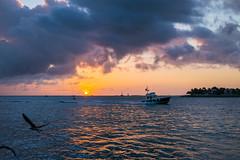 Key West Sunset (3) (romanboed) Tags: oceankeyresortandspa leica m 240 summilux 50 usa florida key west sunset pier christmas outdoor seascape landscape ships sea golden sky