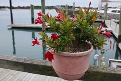 Along the wharf (poeticverse) Tags: waterfront beaufortnc beaufort n northcarolina sea ocean port flower december beauty peaceful