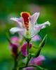 Flower Power (stevenbulman44) Tags: flower costarica canon lseries 2470f28l filter color