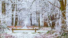 Kindness is like snow, it beautifies everything it covers (PokemonaDeChroma) Tags: 2017 winter forest woods snow snowy fog foggy mist misty canoneos6d 24105mm yvelines iledefrance france trees leaf landscape cold mood frost atmosphere 01012017 january silhouette wooden path bushes people walking 169 cropped fence hff paysage hiver forêt bois neige brouillard arbres branches cloture chemin painterly