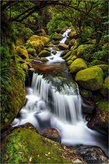 Enchanted Stream (Darkelf Photography) Tags: wairere falls stream waterfall rainforest cascades flow moss rocks nature trees landscape newzealand nz north island travel foliage polariser filter canon 24105mm 5div maciek gornisiewicz darkelf photography enchantedstream 2016