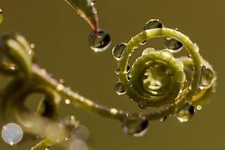 Vegetal spiral - Spirale végétale
