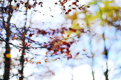 autumn impression (ΞSSΞ®®Ξ) Tags: ξssξ®®ξ pentax k5 bokeh autumn lazio italy smcpentaxm50mmf17 nature outdoor plant montisimbruini up perspective colors foliage fagus beech leaves branches depthoffield pastel blur tree abstract