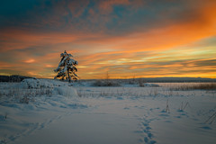Winter dream (PixPep) Tags: glafsfjorden hungvik arvika sverige värmland sweden sunset tree snow winter pixpep