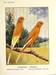 canaries cagebirds fieldmuseumofnaturalhistorylibrary bhl:page=47510868 dc:identifier=httpbiodiversitylibraryorgpage47510868