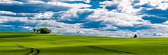 Introspection (Fabrice Le Coq) Tags: blue sky cloud green vert bleu ciel prairie nuages extérieur paysages couleur fabricelecoq