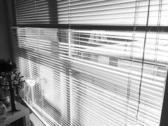 Turn down the honest Sun (Damana) Tags: seattle morning flowers light sun white black tree sunshine person washington bed bedroom shine view fake jewellery blinds oldbuilding capitolhill messedup