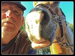 Pret met Sarah (gill4kleuren - 12 ml views) Tags: horse me sarah fun gill saar paard haflinger
