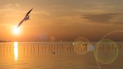 Fly to the sun (jack-sooksan) Tags: ocean light sunset sea sky cloud sun sunlight hot bird beach nature animal sunrise river flow fly bright wind seagull gull wing wave move fresh blow flare