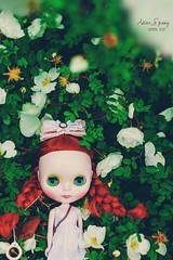 Astor Spring