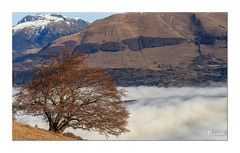 Seul au dessus des nuages (Ylliab Photo) Tags: ylliabphoto ylliab landscape isére lepaysagesimplement tree arbre canon nuages mountain montagne france french trieves travelphotographie travel