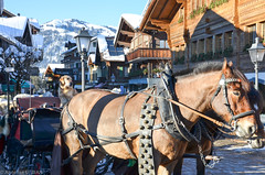 Une voiture bien gardée ! A well guarded car ! (TICHAT10) Tags: gstaad neigeetglace suisse chevaux chiens montagnes coth