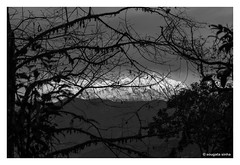 Mount Kanchenjunga: View through the forest (Sougata2013) Tags: sillerygaon darjeeling westbengal india kanchenjungarange mountkanchenjunga forest bw ramiteyviewpoint landscape