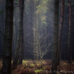 Woodland Light (.Brian Kerr Photography.) Tags: a6500 sonyuk sonypro sonyeurope woodland light availablelight forest trees winter rain mist edenvalley armathwaite cumbria uk outdoorphotography colour briankerrphotography briankerrphoto wwwbriankerrphotographycom sonyzeiss1670nnf4zaoss photography landscapephotography landscape outdoor