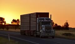 Kenworth (quarterdeck888) Tags: trucks transport semi class8 overtheroad lorry heavyhaulage cartage haulage bigrig jerilderietrucks jerilderietruckphotos nikon d7100 frosty flickr quarterdeck quarterdeckphotos roadtransport highwaytrucks australiantransport australiantrucks aussietrucks heavyvehicle express expressfreight logistics freightmanagement outbacktrucks truckies kenworth t908 stockcrates
