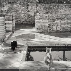 Casas árabes con baño (Juan J. Márquez (de vuelta a la batalla)) Tags: alhambra blancoynegro monocromo granada turismo viajes viajar nazari patrimonio cultura andalucía gatos baño casa arabe casasarabes