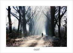 light ahead... (Zino2009 (bob van den berg)) Tags: light rays forest cold foggy nebel mist koud grey sunny holland december zino2009 bobvandenberg cyclist cycle healthy forestpath sunlight sunrays deventer