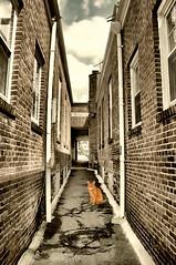 Orange Alley Cat (floralgal) Tags: alleycat alley brickalleyway brickalley catinalleyway orangealleycat orangetabby animal cat pet digitalart brickbuildings urbanlandscape ryenewyork purchasestreet
