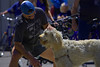 Social Animals (swong95765) Tags: dog man meeting pat cute hello greeting animal pet canine