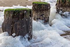 Week 01,  3x50 project 2017 (cindydebree.nl) Tags: fotoproject 3x50 3x502017 nollestrand vlissingen westerschelde zeeland alg kust paalhoofden palen pokken schuim storm strand water weer zee zeewier 50mm 50mm18stm canon canonnl vegetarian6 zeeuws mooi breakwater beach zand sand