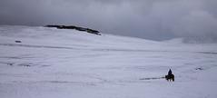 Panthera Naryn 2016 (geoffreybire) Tags: trek kirghizstan ngo ong panthera moutain travel expedition snowleopard adventure