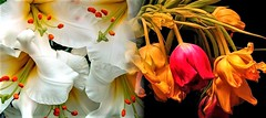 (DeZ - light painter) Tags: ps creativity canada guelph flowers hdr dez