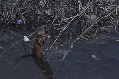Mink mayhem (torreyblevins) Tags: mink wildlife pond