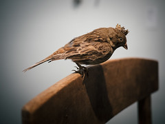 Kiasma | sparrow queen (miemo) Tags: summer bird art museum finland helsinki artwork europe kiasma olympus taxidermy sparrow installation crown omd panasonic20mmf17 ismokajander em5mkii