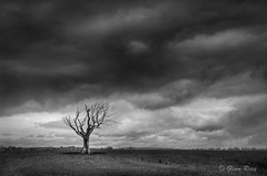 Heavens Above (Glenn D Reay) Tags: blackandwhite tree dead mono moody pentax stormy alnwick solitary minimalist k30 pentaxart glennreay