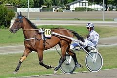 Traberderby 022 (Frank Guschmann) Tags: horses berlin germany deutschland nikon pferde horserace 2015 pferderennen trabrennbahnmariendorf d7100 traberderby frankguschmann nikond7100