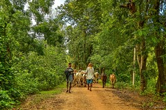 Daily life (Sougata2013) Tags: life india bengal bangla westbengal nikond3200 birbhum santiniketan sonarbangla