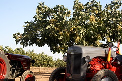 IMG_0364 (ACATCT) Tags: old espaa tractor spain traktor agosto toledo antiguo massey pistacho tembleque barreiros 2015 bustards perdices liebres avutardas ff30ds r350s