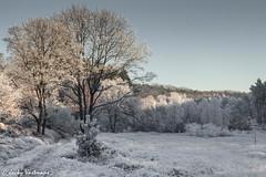 161230_006-118.jpg (Jacky Vastmans) Tags: limburg maasmechelen mechelseheide beriezen bevroren bos cold freezing frozen koud landscape landschap panorama sneeuw sneeuwlandschap snow snowy stilleven vriezen winter winterlandschap wood
