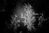 Eiskristall_ESD_0460 (fotoquotidian) Tags: eiskristalle makroobjektiv kalt bw nikond4 thomasmeierlöpfe 105mm