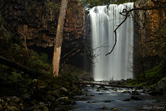 (Laszlo Papinot) Tags: trenthamfalls trentham river water tree log rock
