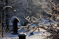 SOFT MORNING (botavara_50) Tags: nieve frio paisaje nevada snow carrollton kentucky ky canon 40d usa he new masterclass