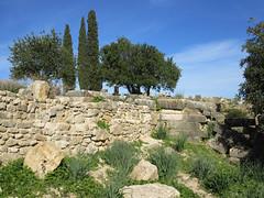 Ruined wall and trees, Volubilis, Morocco (Paul McClure DC) Tags: morocco almaghrib fèsmeknèsregion volubilis jan2017 roman architecture historic